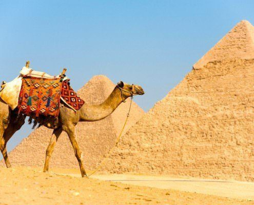 Egypt and Jordan from Canada - Camel walks in front of the Pyramids of Cheops and Khafre at Giza in Cairo