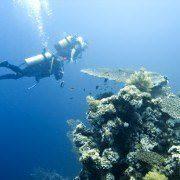 El Gouna Diving Holidays