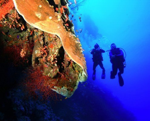 Egypt All Inclusive Diving Holidays