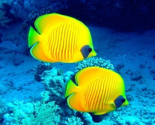 Marsa Alam Diving Holidays