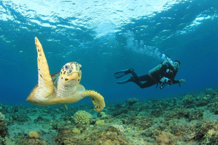 Red Sea Diving Holiday Packages
