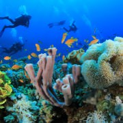 Sharm El Sheikh Diving Holidays