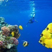 Diving In Sharm El Sheikh The Brief Guide Egypt Tours