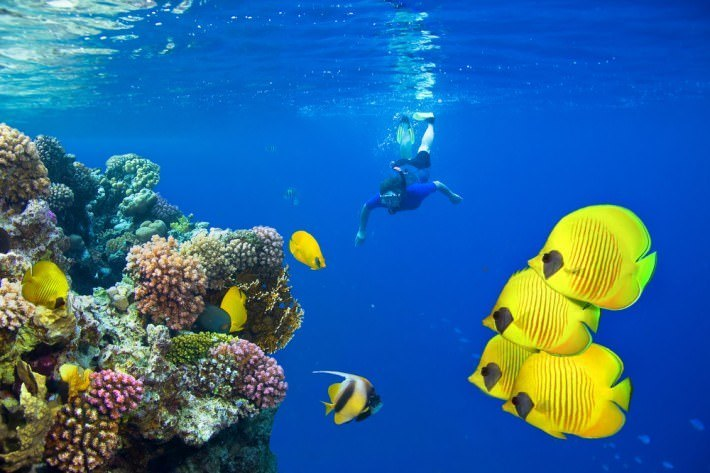 Sharm El Sheikh Tours