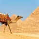 5 Day Tour of Cairo