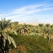 Bahariya Oasis Tour