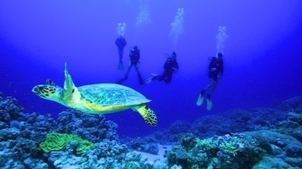 Egypt Diving Holidays