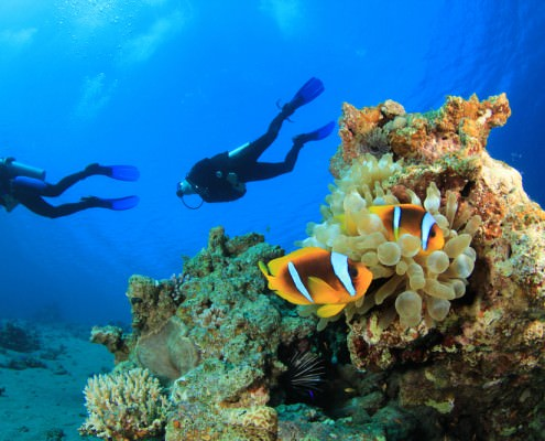 Egypt Diving Package