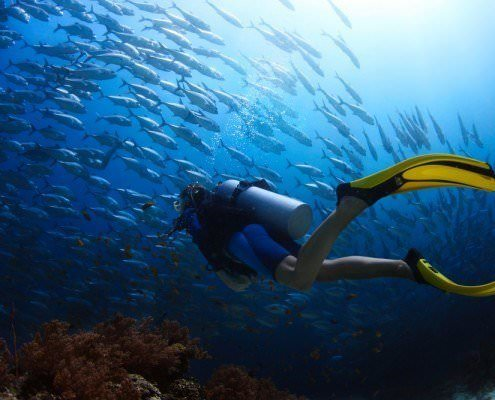 Egypt Diving Tour
