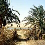 Farafra Oasis Tours