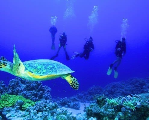 The underwater world of the Red Sea is must-see attraction in Egypt