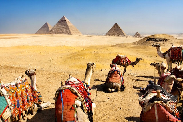 Cairo Tour Packages - Giza Pyramids and Camels