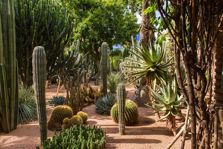Marrakech Private Tours - Botanical Garden Jardin Majorelle