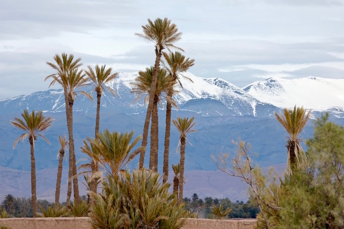 Tours from Marrakech - Palm trees and Atlas Mountains