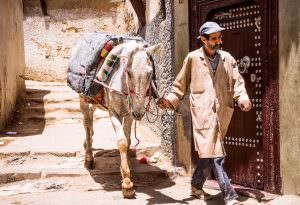 man with horse in old Medina narrow street of Fez in Morocco.Fez is a historic city listed in UNESCO. May 26, 2014,Fez, Morocco.