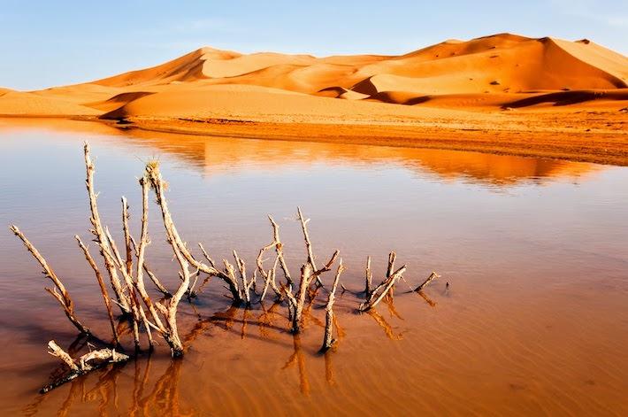 Dry plant in desert lake; Erg Chebbi, Merzouga, Marocco