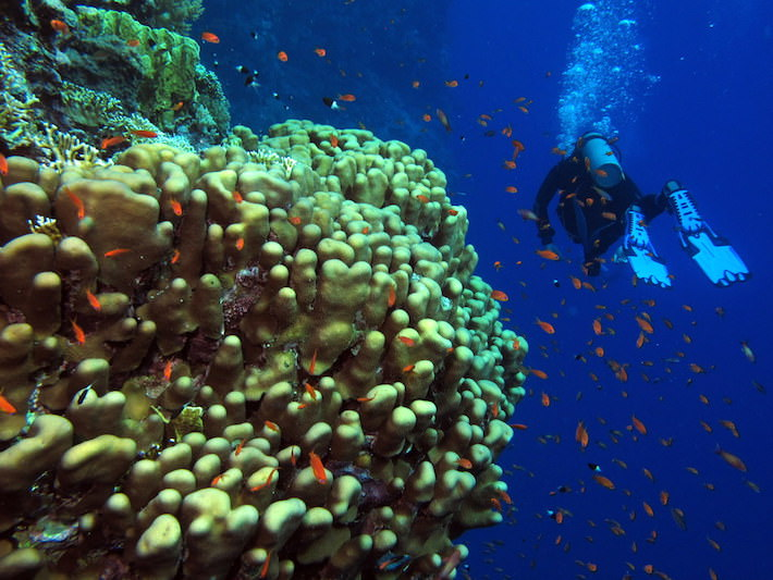 Red Sea Egypt Diving