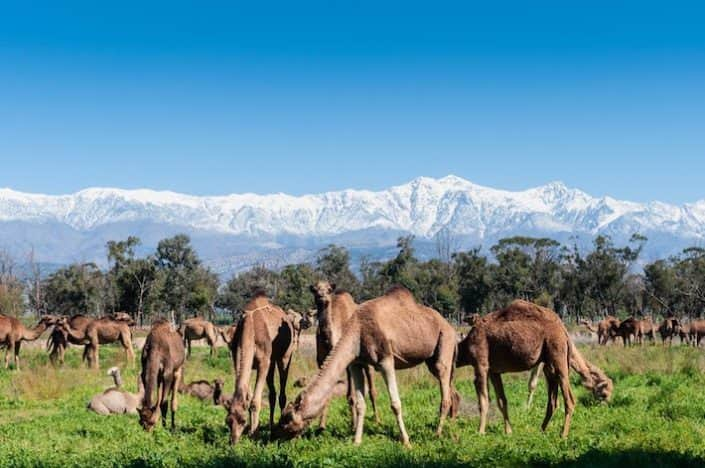Morocco Multi-Country Tours
