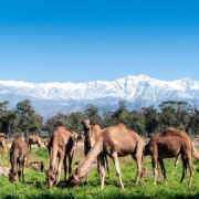 Spain, Morocco and Egypt Tours