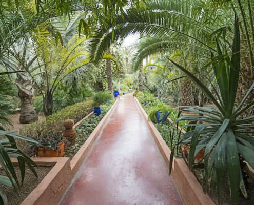 Corridors with cactuses and palm trees in Majorelle Garden.