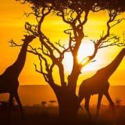 Egypt and Kenya Tour