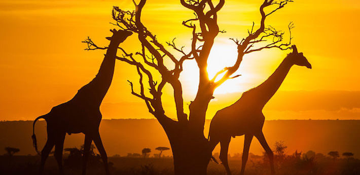 Egypt and Kenya Safari Tours