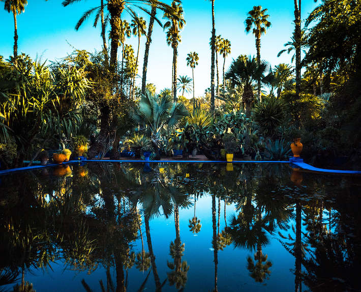 Palm trees in Majorelle gardens