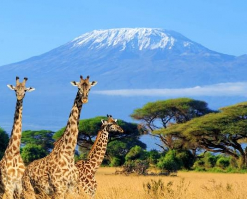 Egypt and Kenya Tours