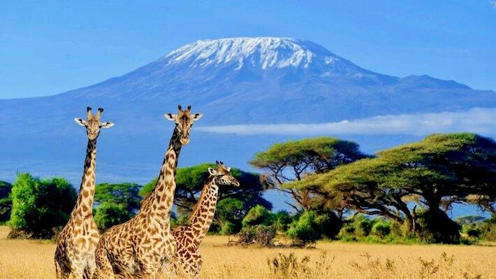Egypt and Kenya Tours