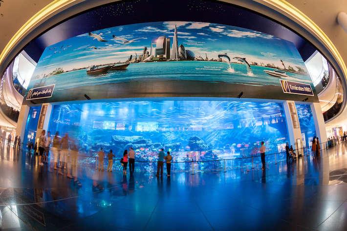Dubai Aquarium and Underwater Zoo in the Dubai Mall