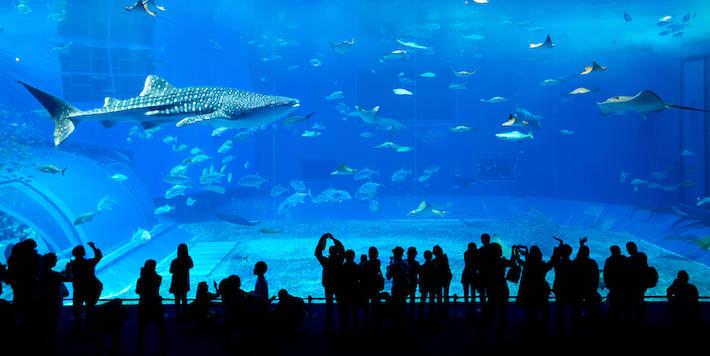 Giant whale shark in Dubai Aquarium and Underwater Zoo