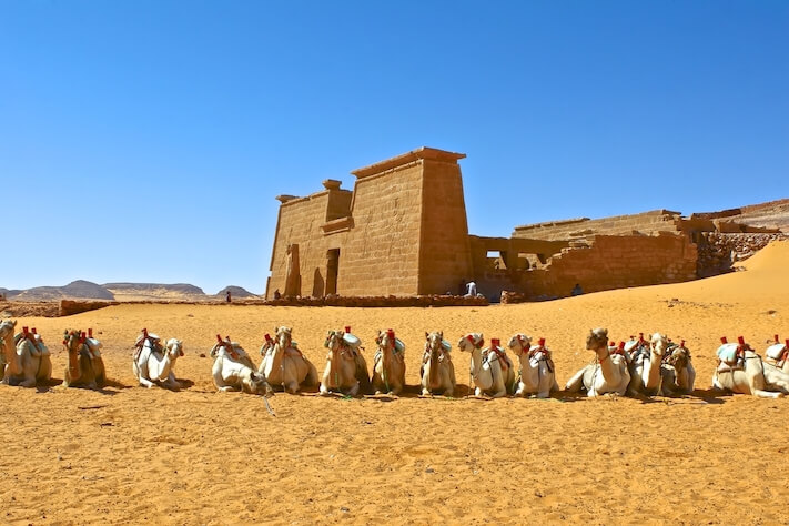 Viajes a Egipto - Camellos en el templo de Wadi al-Sabua