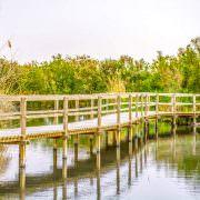 Footbridge in Azraq Wetland Reserve, Jordan
