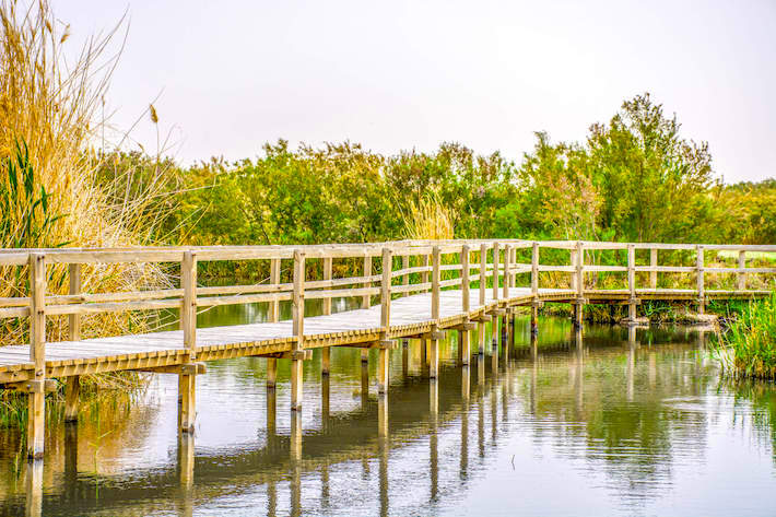 Footbridge in Azraq Wetland Reserve, Jordan