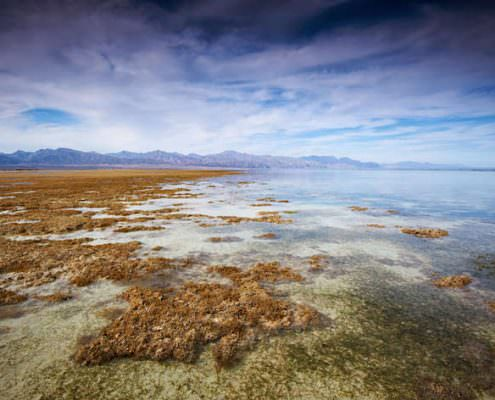 Low tide in the Nabq National Park