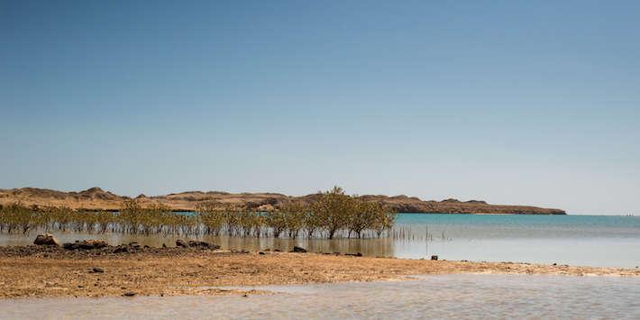 Mangrove channel in Ras Mohammed National Park