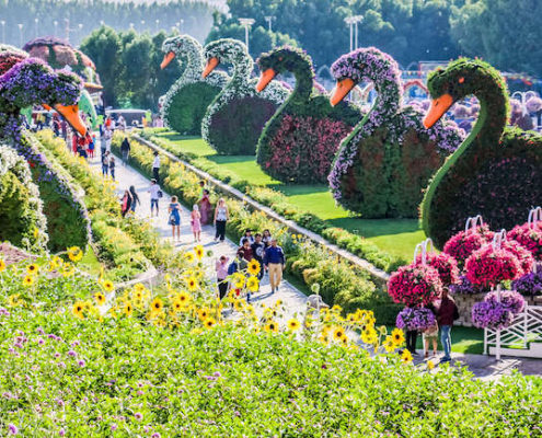 Flower swans in Dubai Miracle Garden