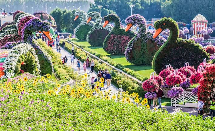 Dubai Miracle Garden Welcome To The World S Largest Flower Garden