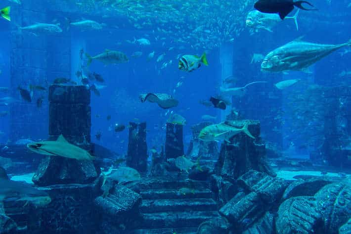 Lost Chambers Aquarium inside Atlantis Hotel on Palm Jumeirah