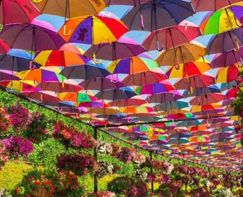 Multicolor umbrellas roof in Dubai Miracle Garden