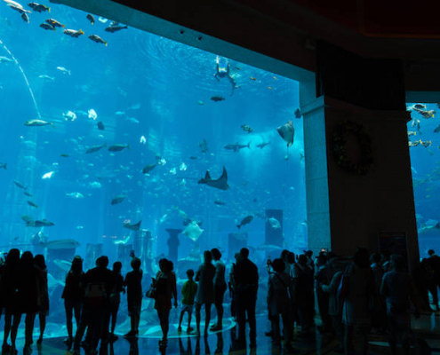 The Lost Chambers Aquarium at Altantis The Palm hotel in Dubai