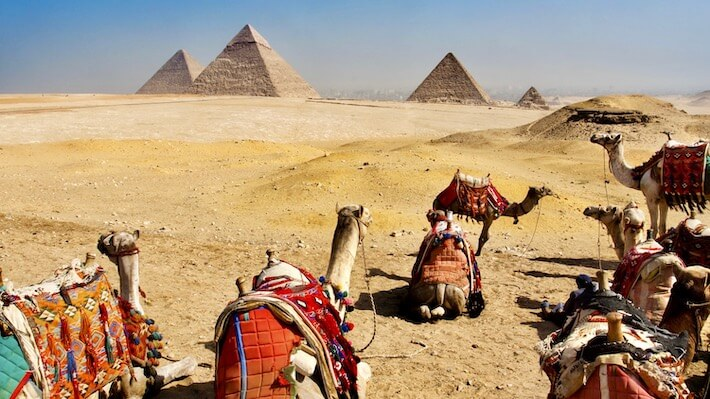 Camels at the Giza Pyramids