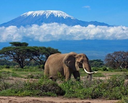 Egypt and Tanzania Tour