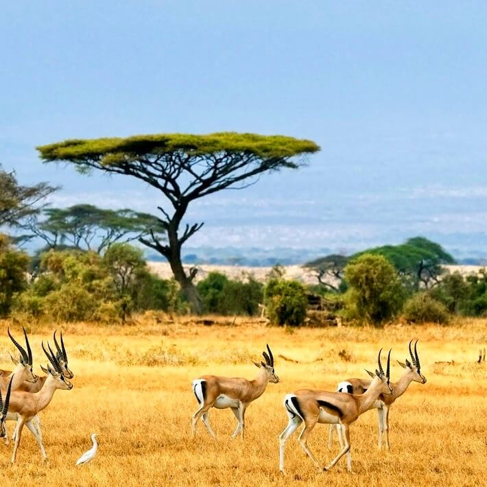 Africa and Middle East Tours