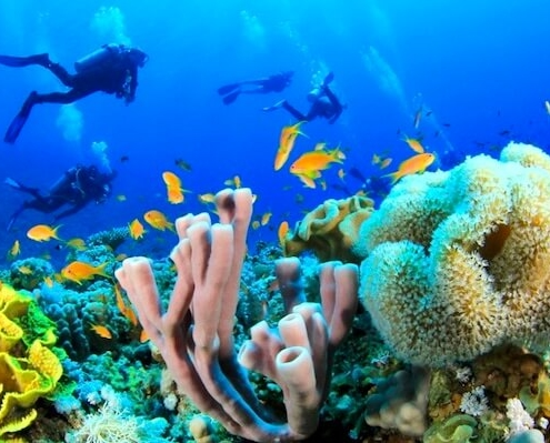 Sharm El Sheikh Diving Package